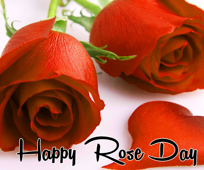 latest Happy Rose Day red flower hd