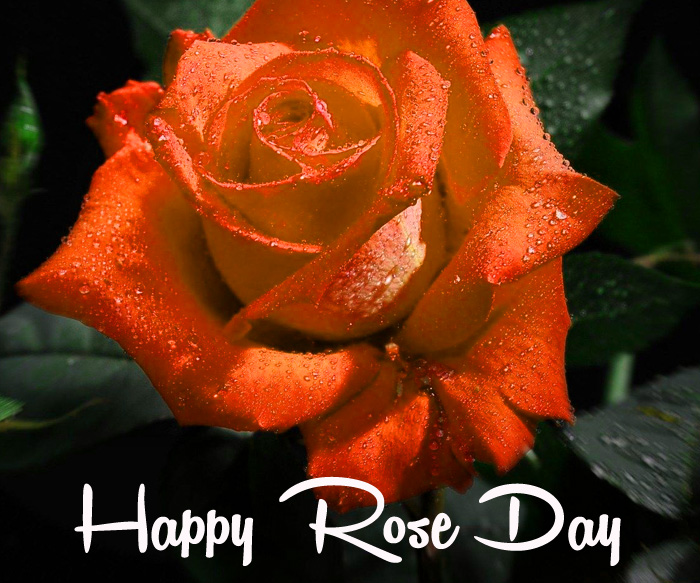 latest Happy Rose Day wallpaper