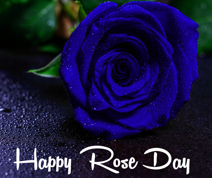 latest blue flower Happy Rose Day hd