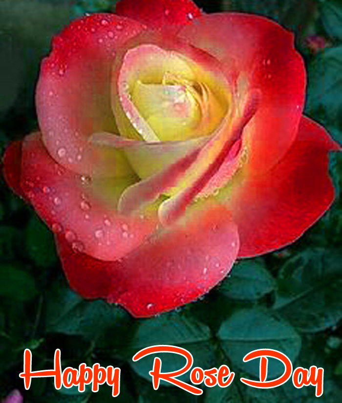 latest flower Happy Rose Day Gift hd
