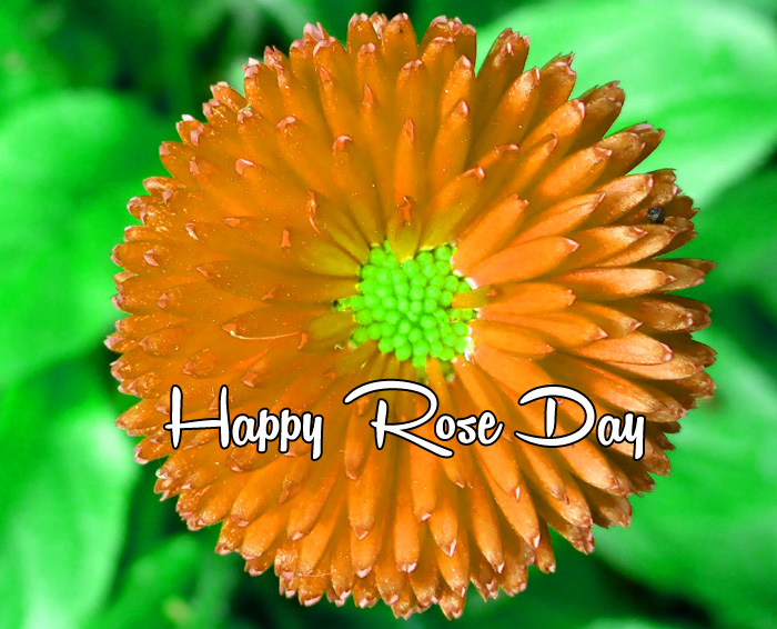 latest flower Happy Rose Day Gift photo
