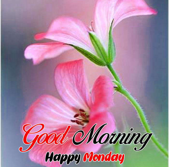 latest pik flower Good Morning Happy Monday images hd