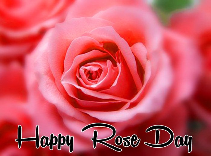 latest pink flower Happy Rose Day Gift hd