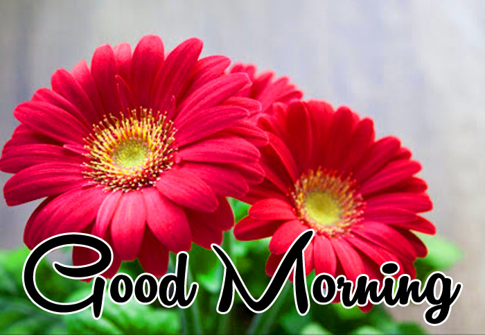 latest red flower Good Morning photo for whatsapp hd