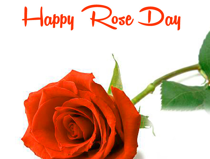 latest red flower Happy Rose Day Gift photo
