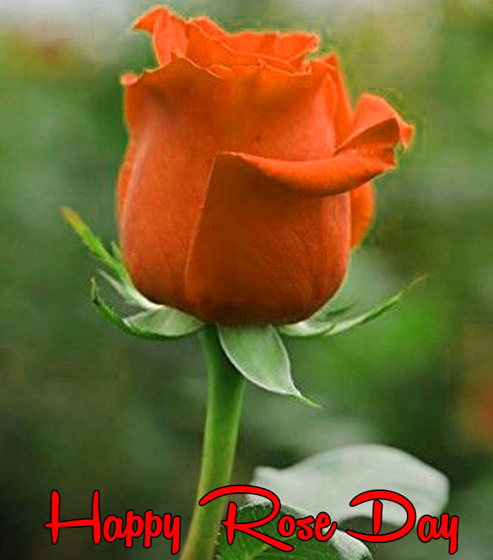latest red flower Happy Rose Day hd photo