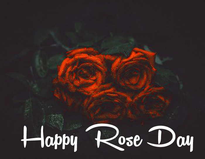 latest sad red flower Happy Rose Day hd
