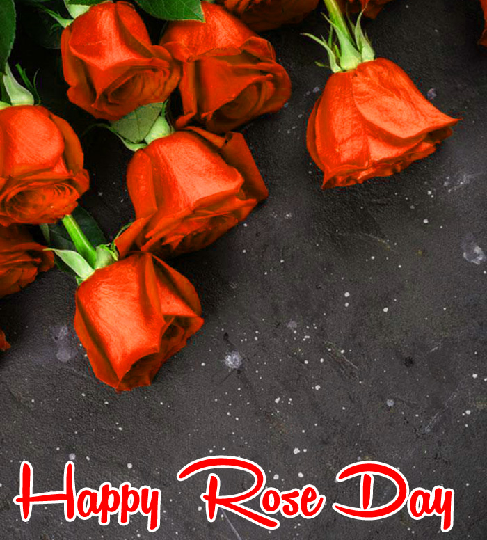latest small flower Happy Rose Day hd