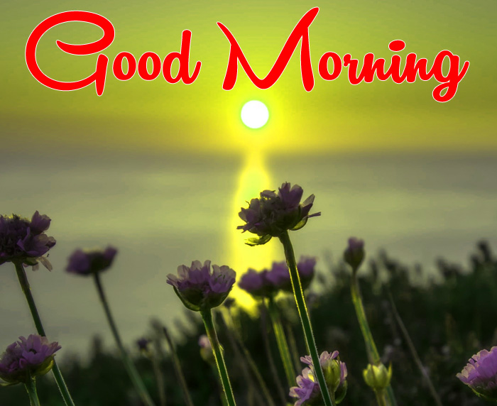 latest sunrise Good Morning alone flower hd