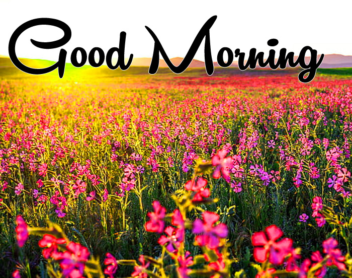 latest sunrise Good Morning flower images hd