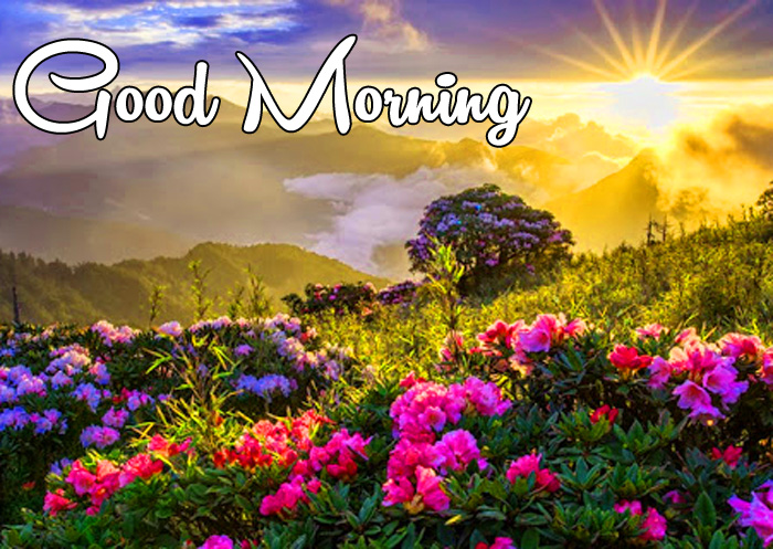 latest sunrise Good Morning red flower hd wallpaper