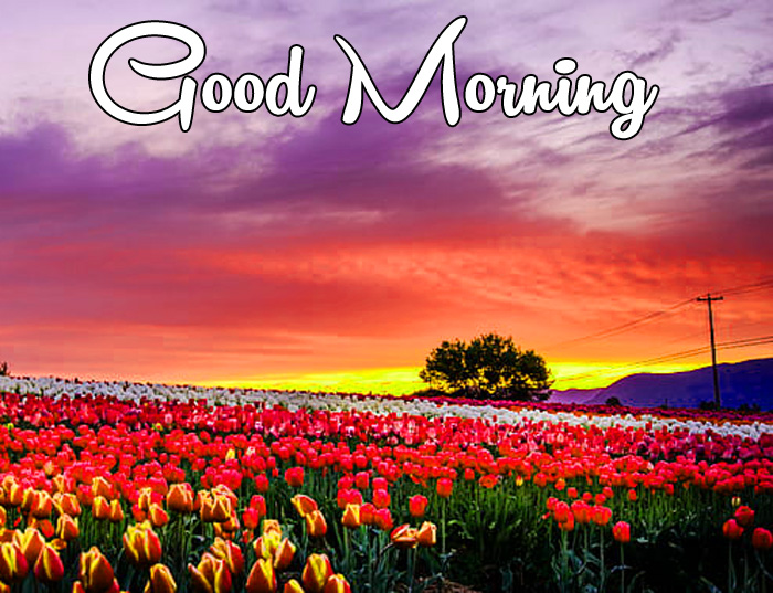 latest sunrise Good Morning red flower images hd