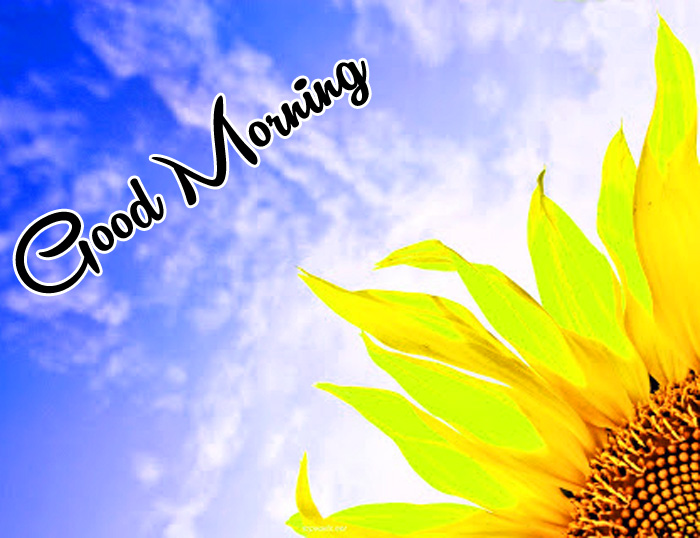 latest sunrise Good Morning yellow flower hd