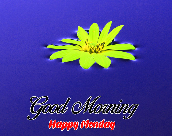 latest yellow flower Good Morning Happy Monday images hd