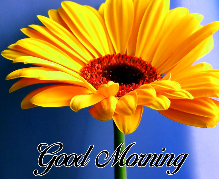 latest yellow flower Good Morning images hd
