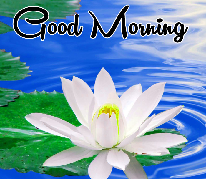 lily flower Good Morning images for whatsapp