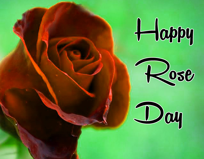 love flower Happy Rose Day wallpaper