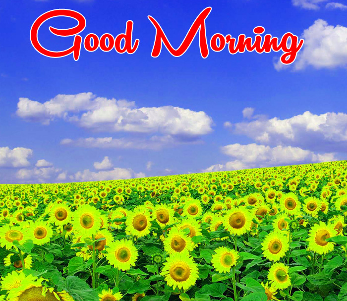 new sunrise Good Morning small yellow flower hd
