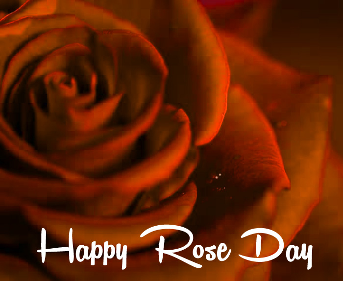 nice Happy Rose Day Gift red flower hd