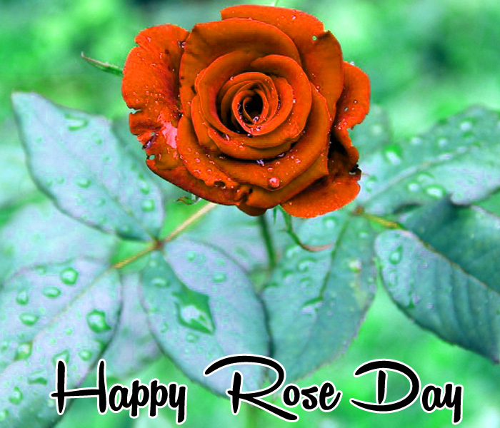 nice Happy Rose Day flower pics