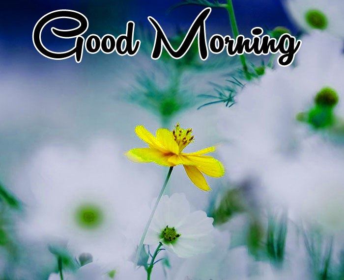 nice alone Good Morning images