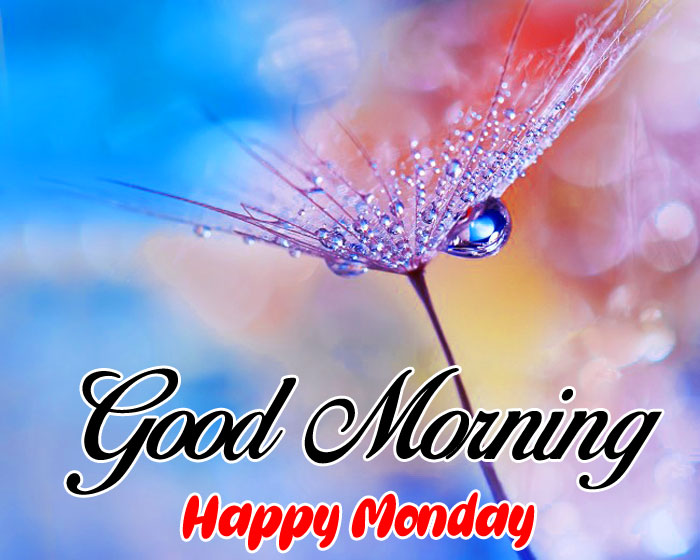 nice flower Good Morning Happy Monday images hd