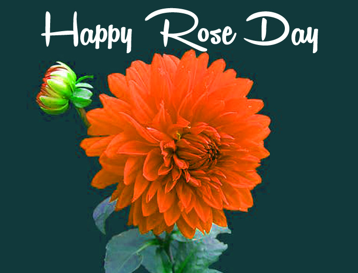 nice flower Happy Rose Day Gift hd