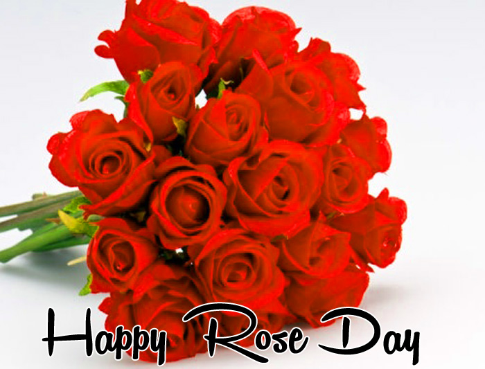 nice flower Happy Rose Day hd wallpaper