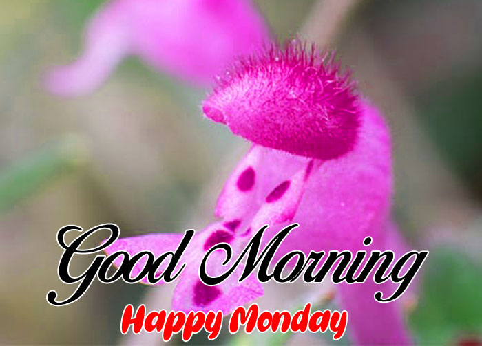 nice pink flower Good Morning Happy Monday images hd