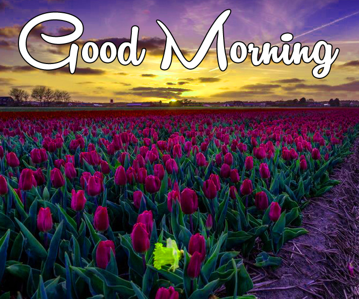 nice sunrise Good Morning flower images hd