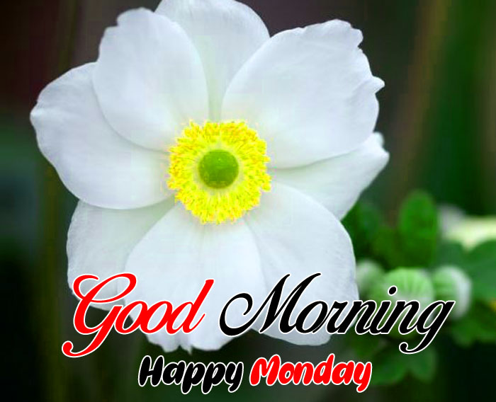 nice white flower Good Morning Happy Monday hd