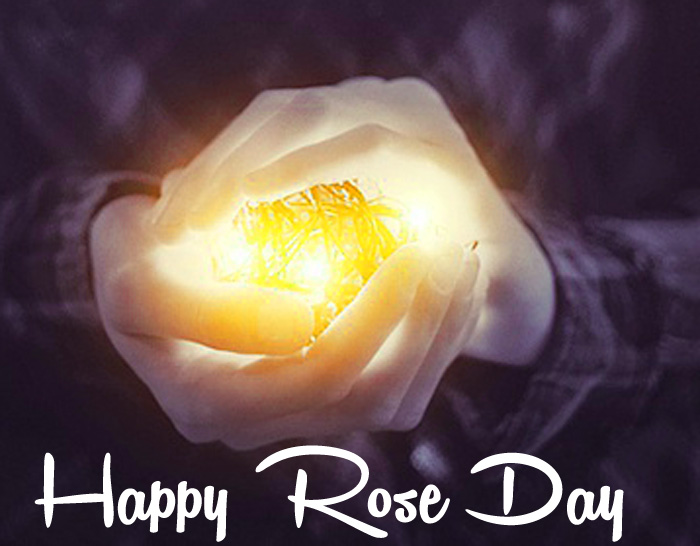 nice white flower Happy Rose Day Gift hd