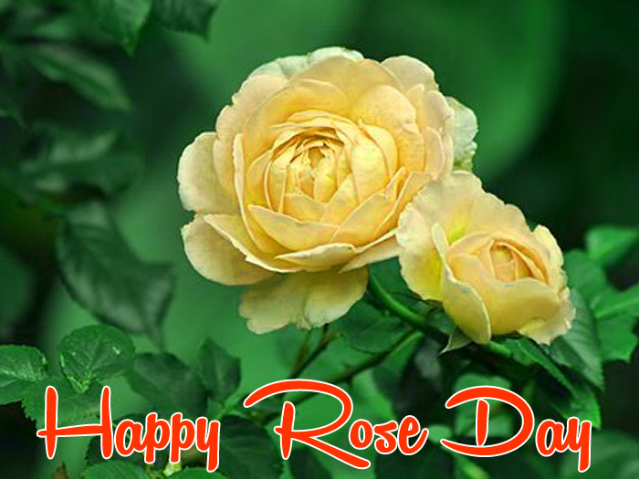nice yellow flower Happy Rose Day Gift hd