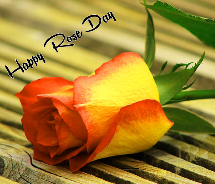 orange flower Happy Rose Day hd