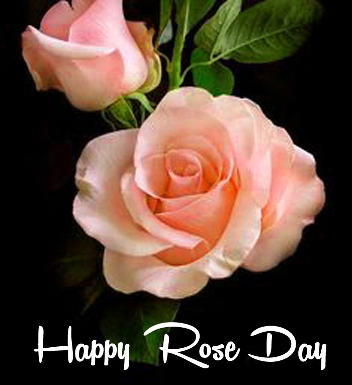 pink flower Happy Rose Day Gift photo