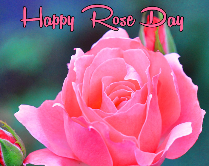pink flower Happy Rose Day Gift pics hd