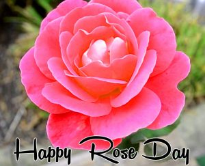 pink flower Happy Rose Day hd