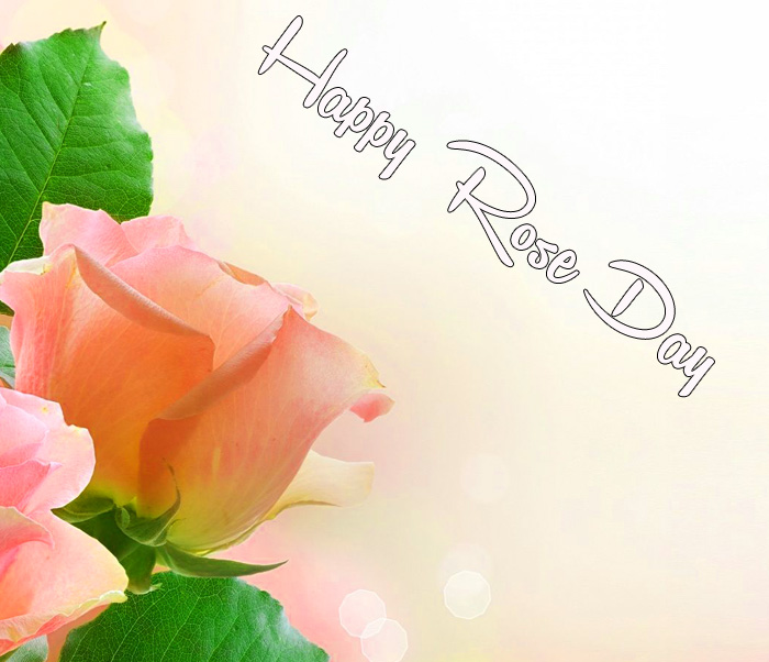 pink flower Happy Rose Day wallpaper