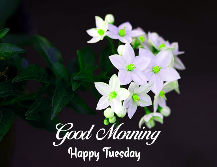 plant flower good morning happy tuesday hd
