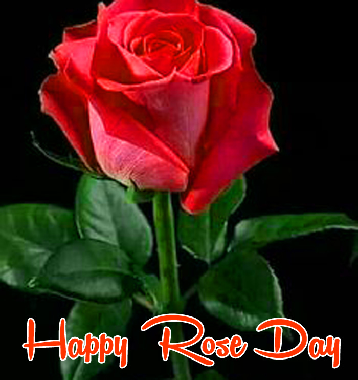 red flower Happy Rose Day Gift hd wallpaper