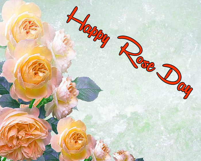 red flower Happy Rose Day Gift images