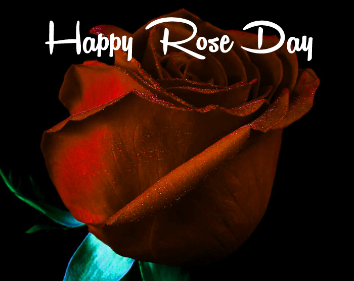 red flower Happy Rose Day Gift picture hd