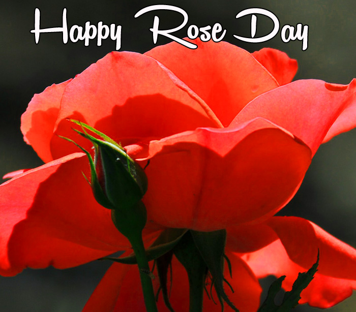 red flower Happy Rose Day hd picture