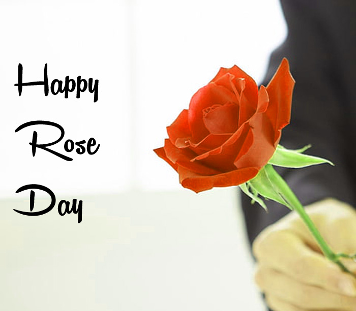 red flower Happy Rose Day hd wallpaper