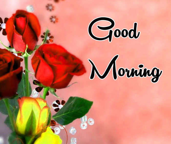 red rose Good Morning photo for whatsapp hd