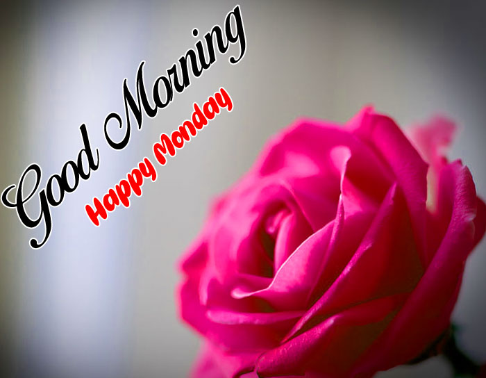 red rose flower Good Morning Happy Monday picture