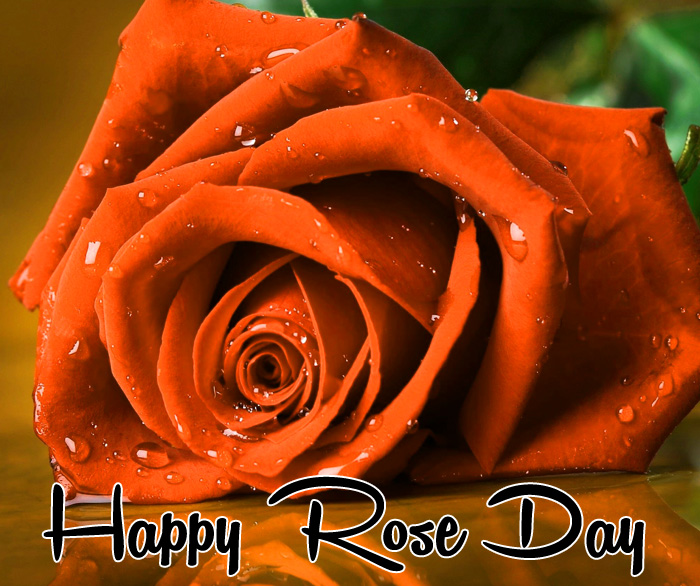 sad flower Happy Rose Day images