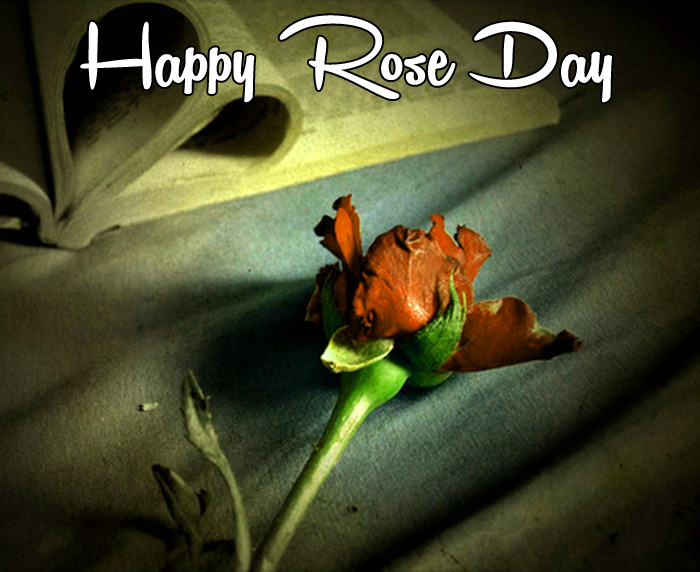sad flower Happy Rose Day photo