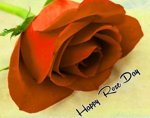 sad red flower Happy Rose Day hd photo