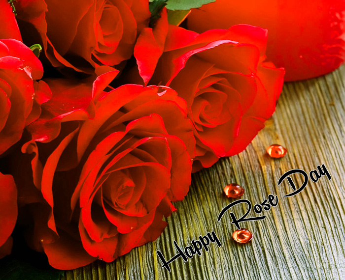 sad red flower Happy Rose Day hd